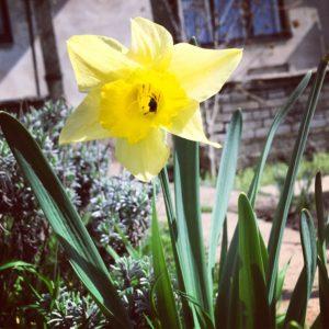 květina se včelou