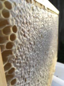 zavíčkovaný plást plný medu